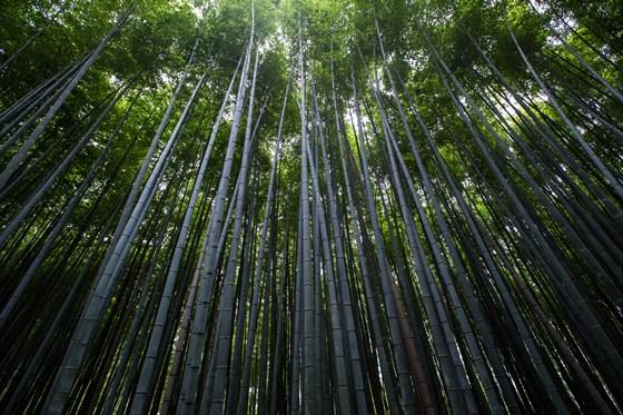 Bambus wird in vielen Lebensbereichen immer beliebter.