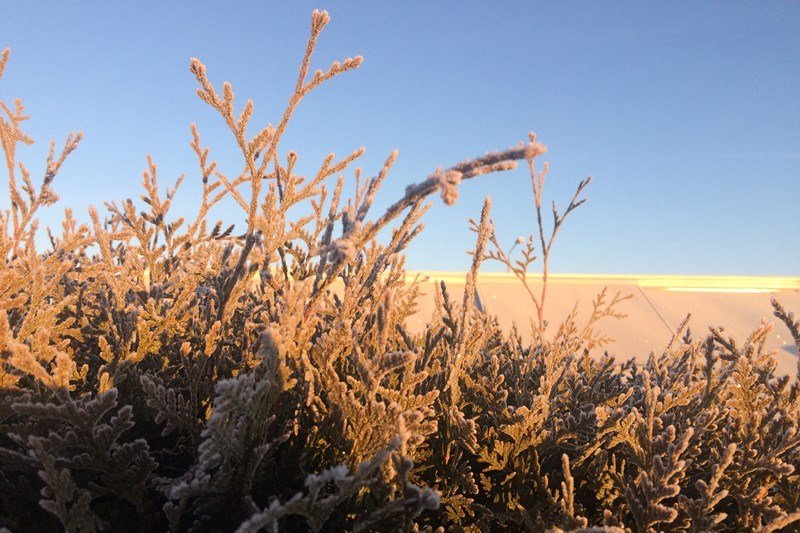 Frost im winterlichen Garten, Foto: Sebastian Starke