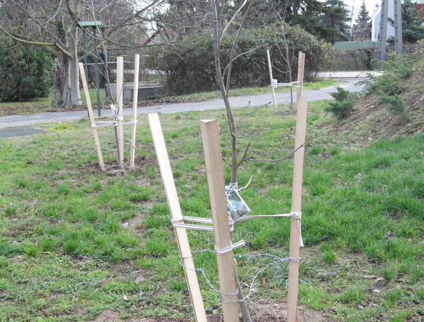 Frisch gepflanzte Bäume