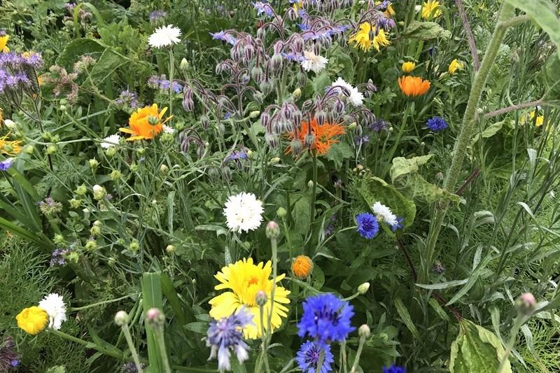 Ein Platz für Bienen im Garten, Foto: Sebastian Starke