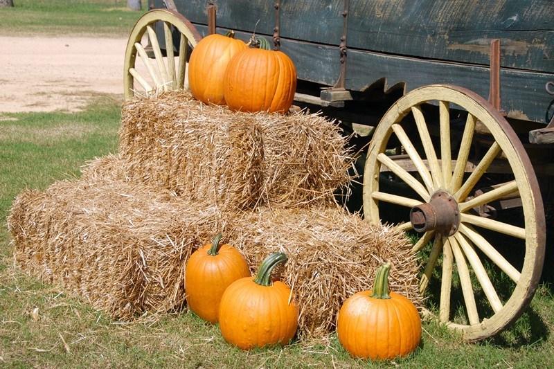 Herbstdekoration mit Stroh und Kürbissen