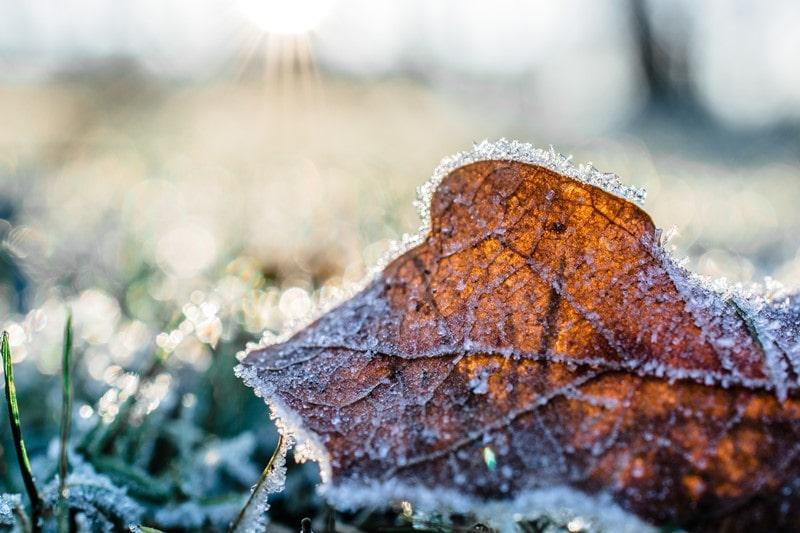 Mit Eis überzogenes Blatt und Gras im Winter.