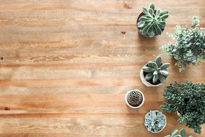 Topfpflanzen stehen auf Vinylboden