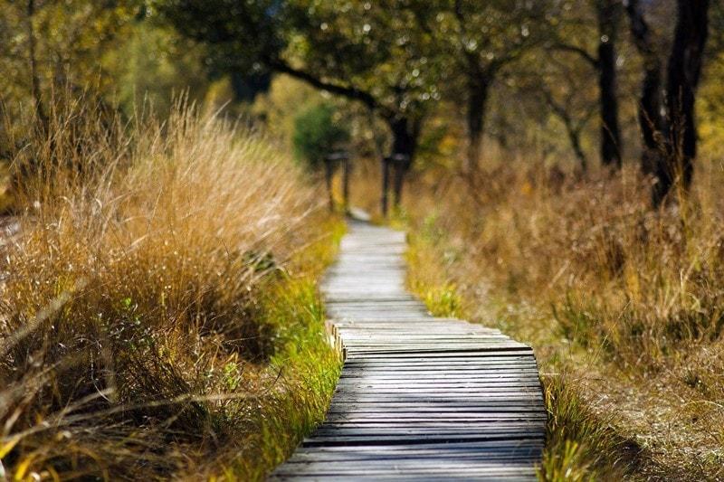 Holzpfad durch die Natur